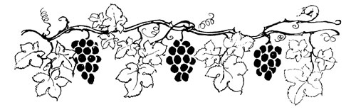The fox and the grapes - Dessin feuille de vigne ...